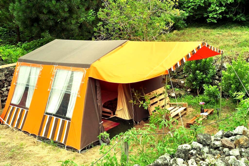 AbbyVille ^ Comfortable garden camp ^ Passion St - Biscoitos