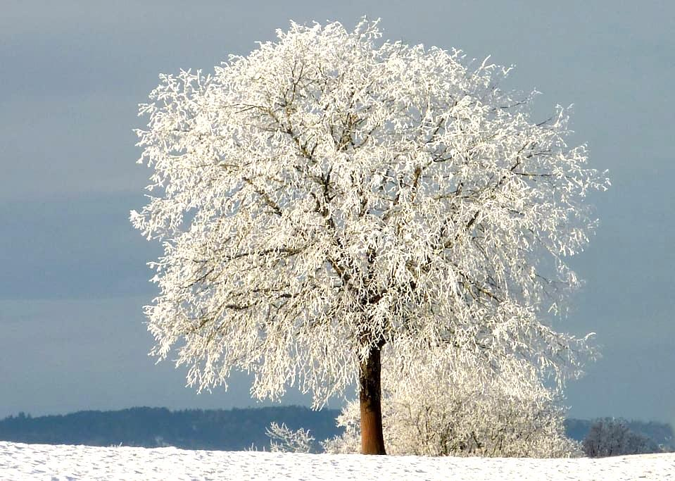 Winter pleasures, but go out properly. Ask for Tip - Herisau - Wohnung