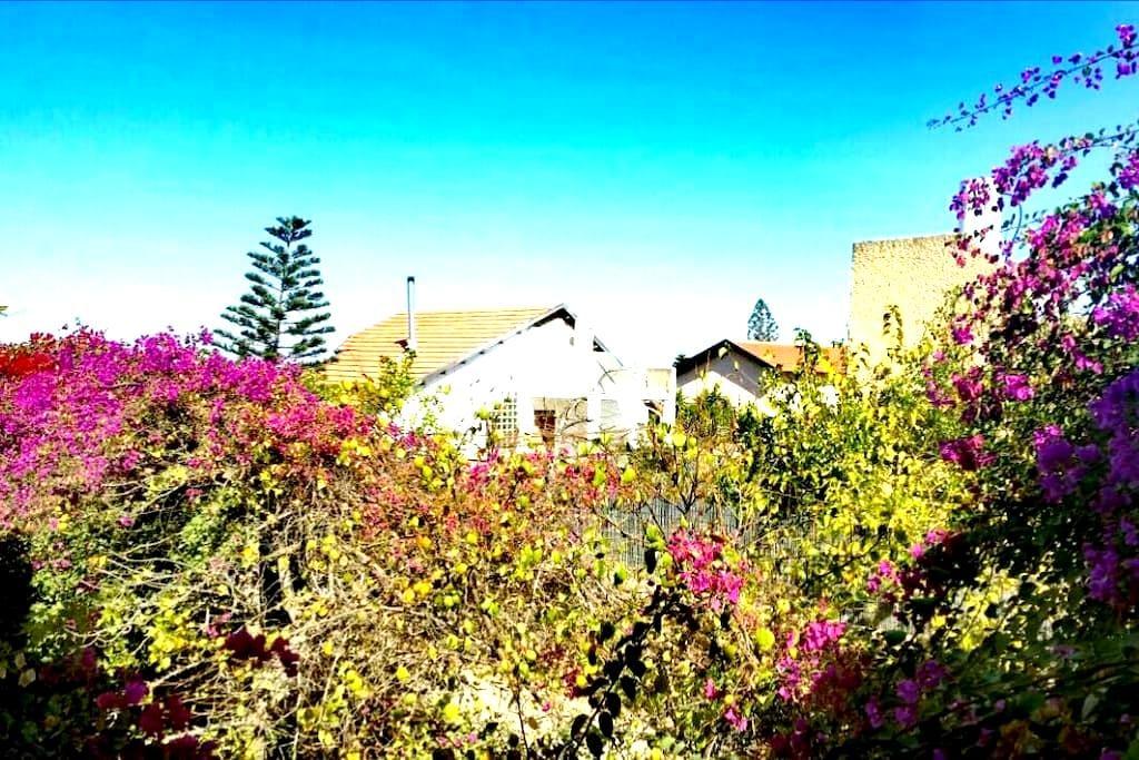 LeSaNel - Guest House - Arad - Vila