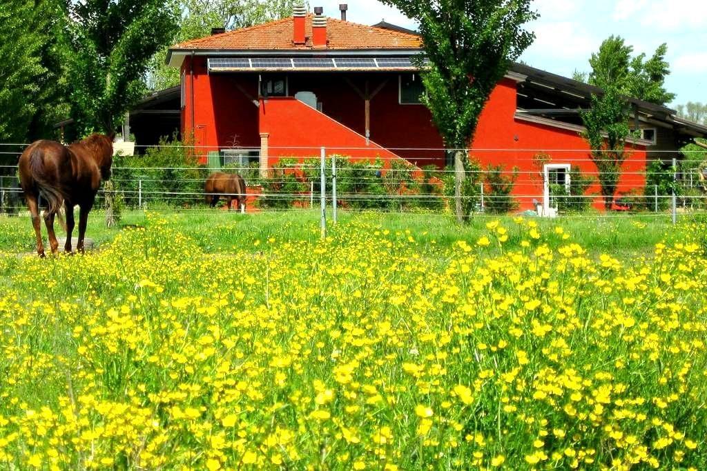 stanza verde - Badia Polesine