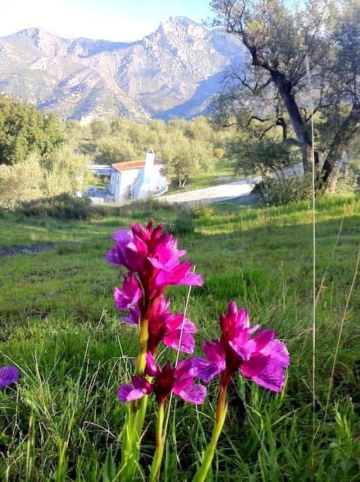 Casita Algarrobo - Jete - Cottage