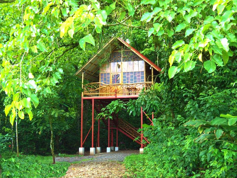 Rainforest Tree House2 with Hot Springs - Cooper - Casa en un árbol