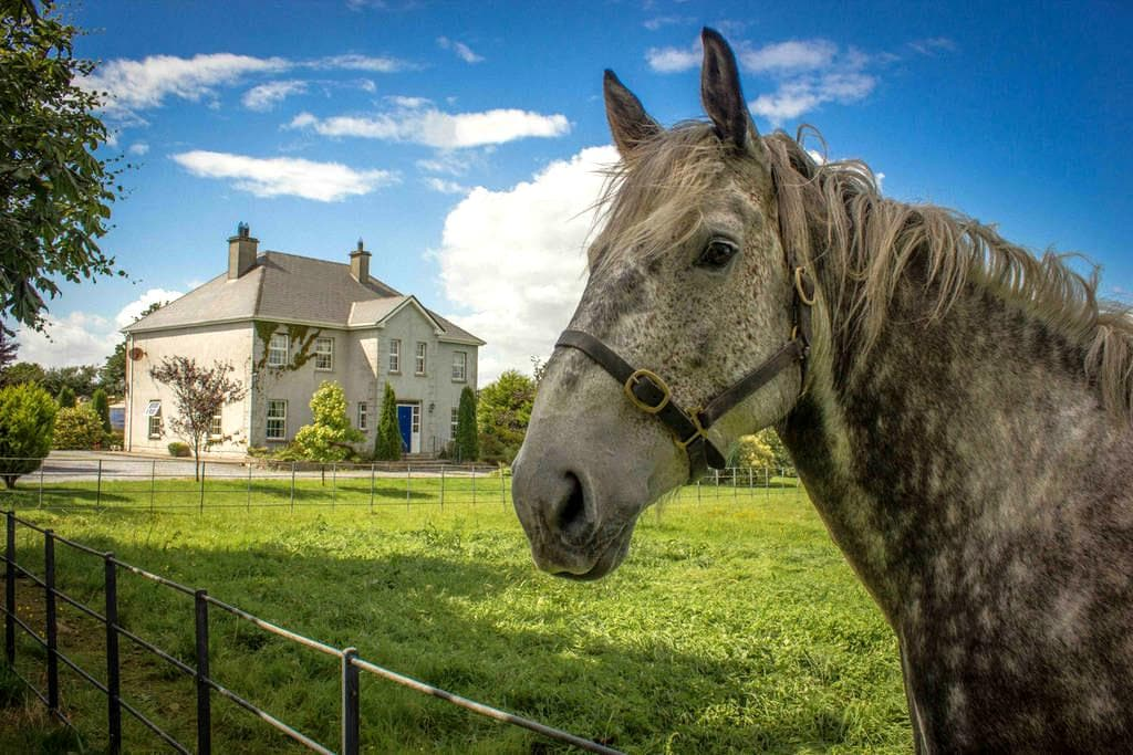 The Ivy House - Athenry