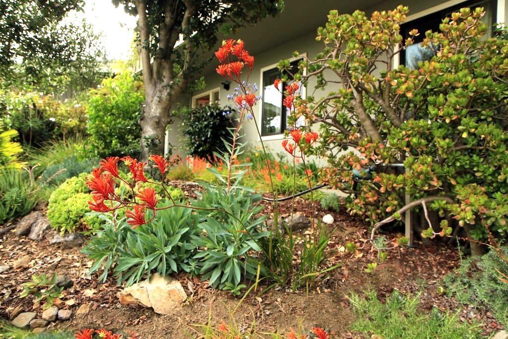 Studio charmant près de l'université - Berkeley - Andere