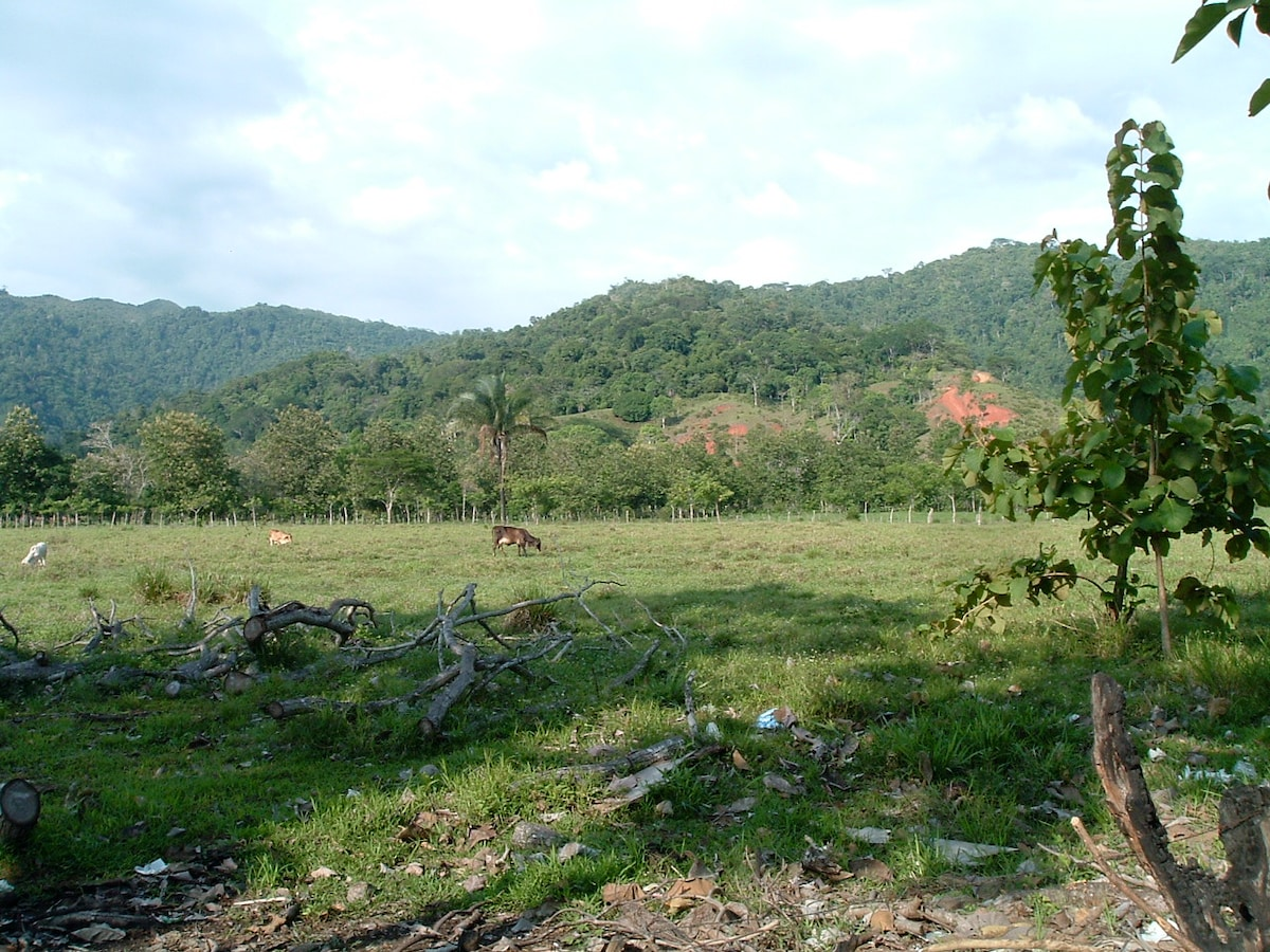 The open jungle and pasture next to the house as you drive down the road and turn into the road leading to the house.