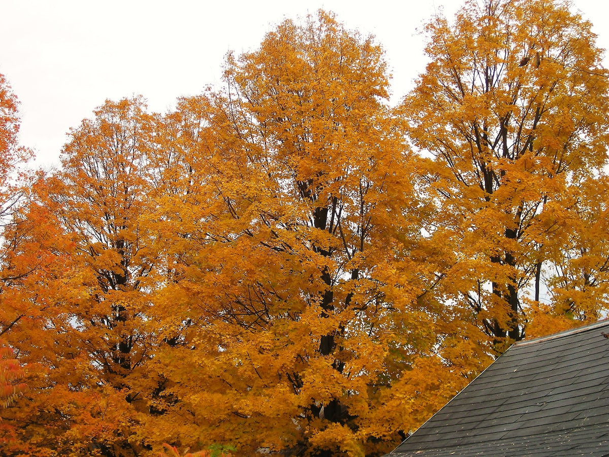 A little slice of peak foliage from the back yard.