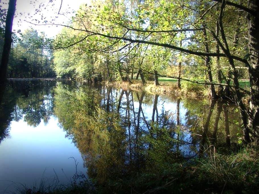 Hiver en Ardennes : feu ouvert, bois, étang - Couvin - Villa