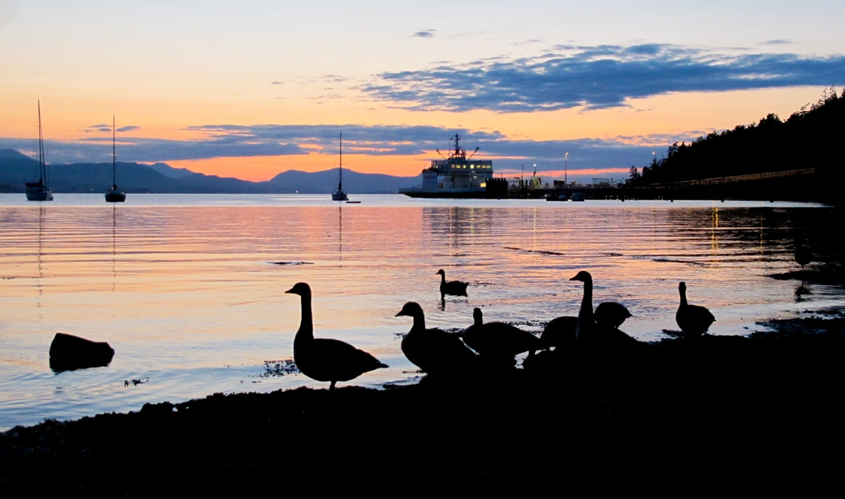 Sunset at Vesuvius.... one of many enjoyed by guests and ducks alike.