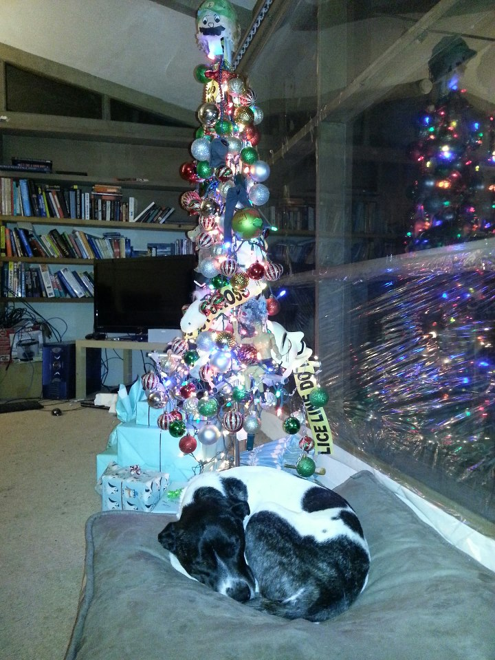 Our former dog Abby in front of our homemade christmas tree in the living room.