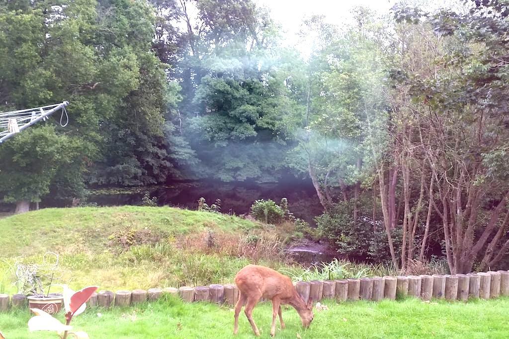 Peaceful bright lge dbl w/wildlife - Haywards Heath - Hus