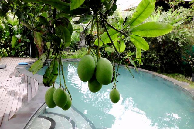Balian Riverside Sanctuary - Melati