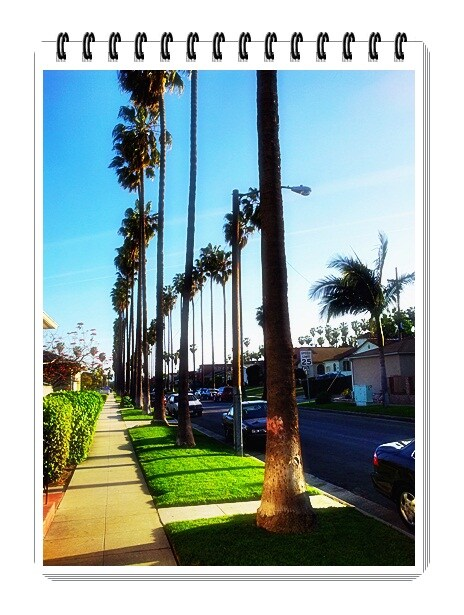 Lovely palm trees tell you YOU'VE ARRIVED in Los Angeles!