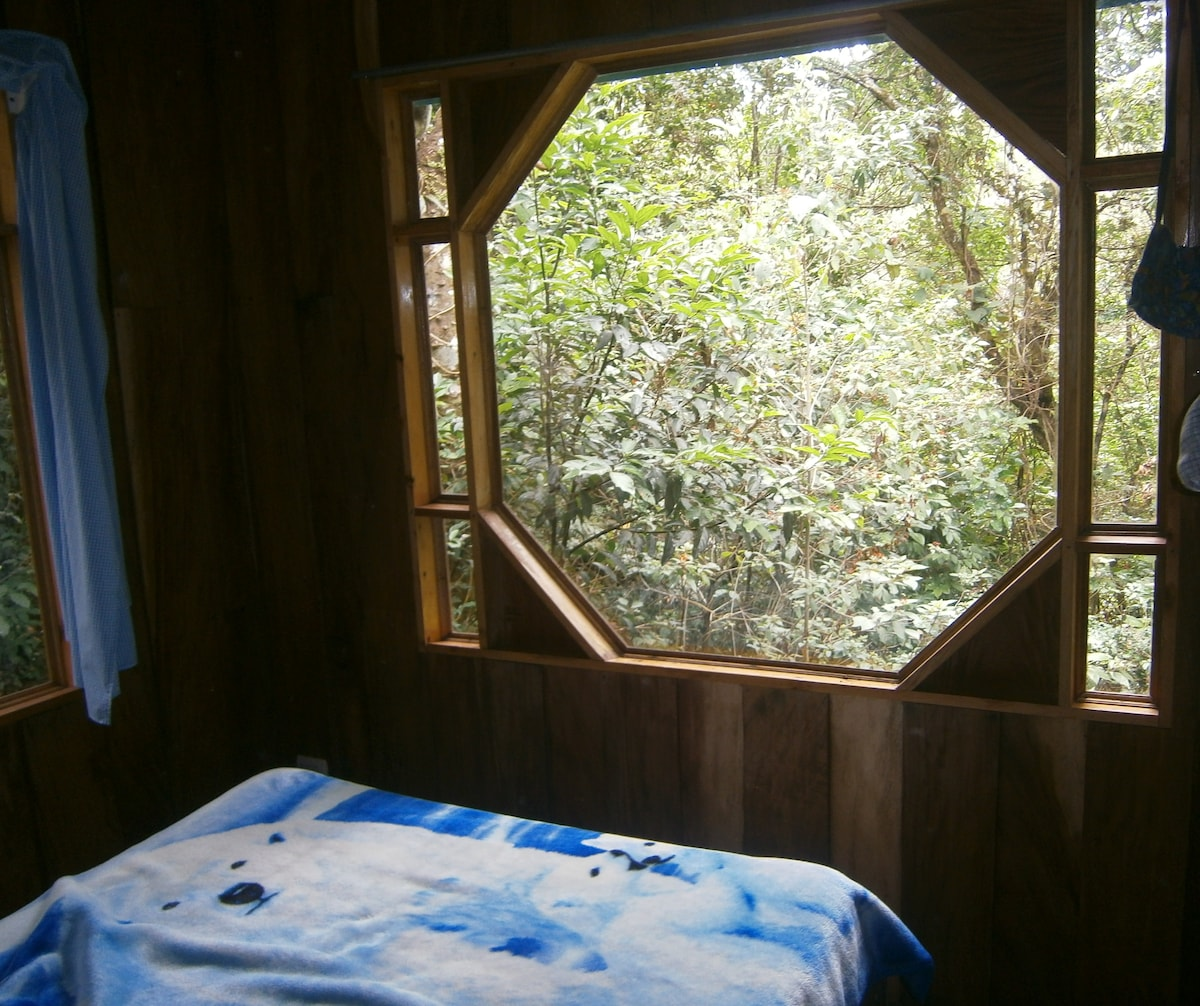 Gaze out on the forest activities right from bed!