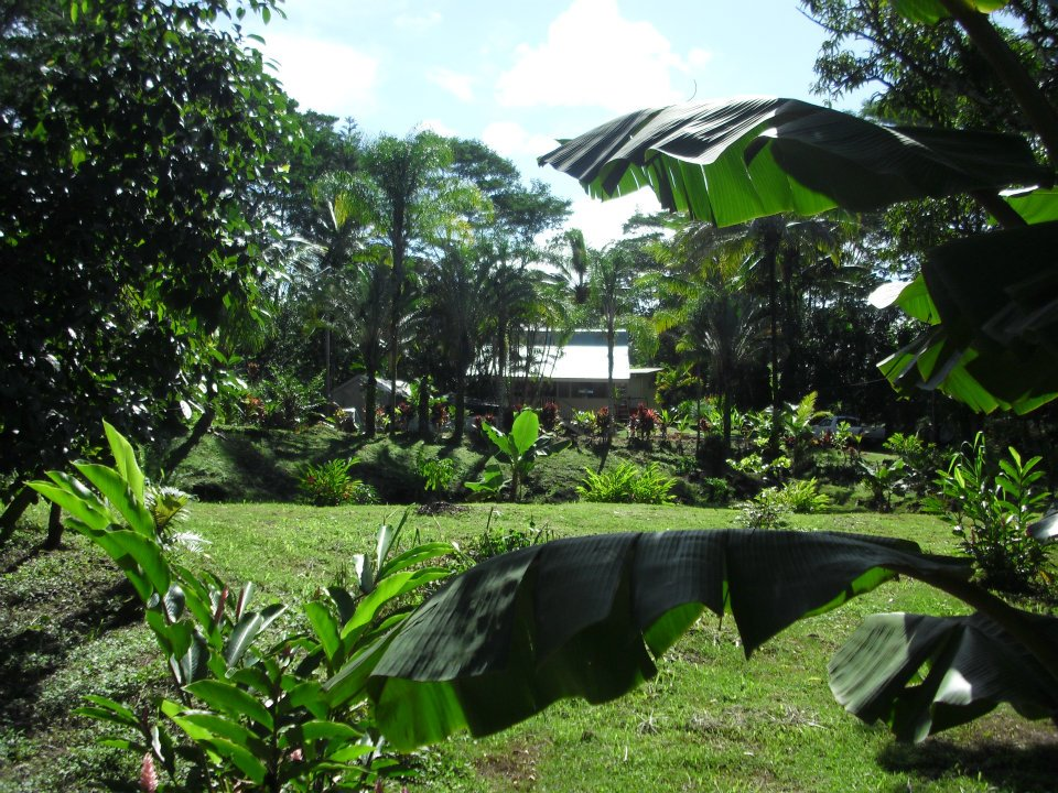 VIEW FROM BANANA GROVE LOOKING TOWARDS RENTAL