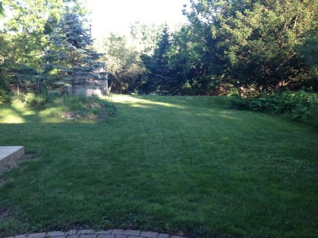 Backyard from ground level