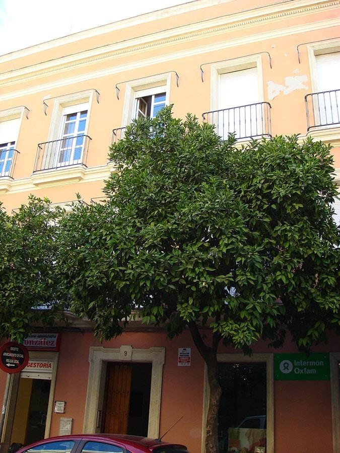 Apartment in the city Centre Jerez