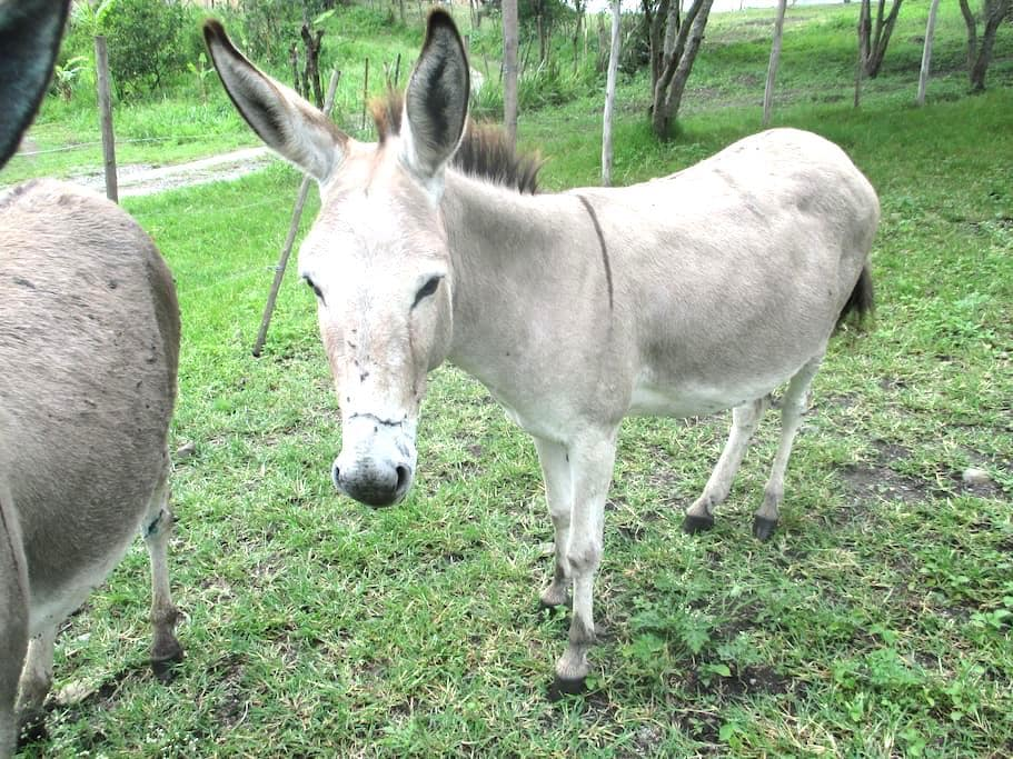 Donkey's Dormitory - $50/ person/ week (best deal) - Vilcabamba - Ubytovna