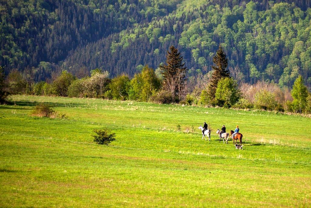 Nature & horses 4 mountain lovers! - Janowice Wielkie