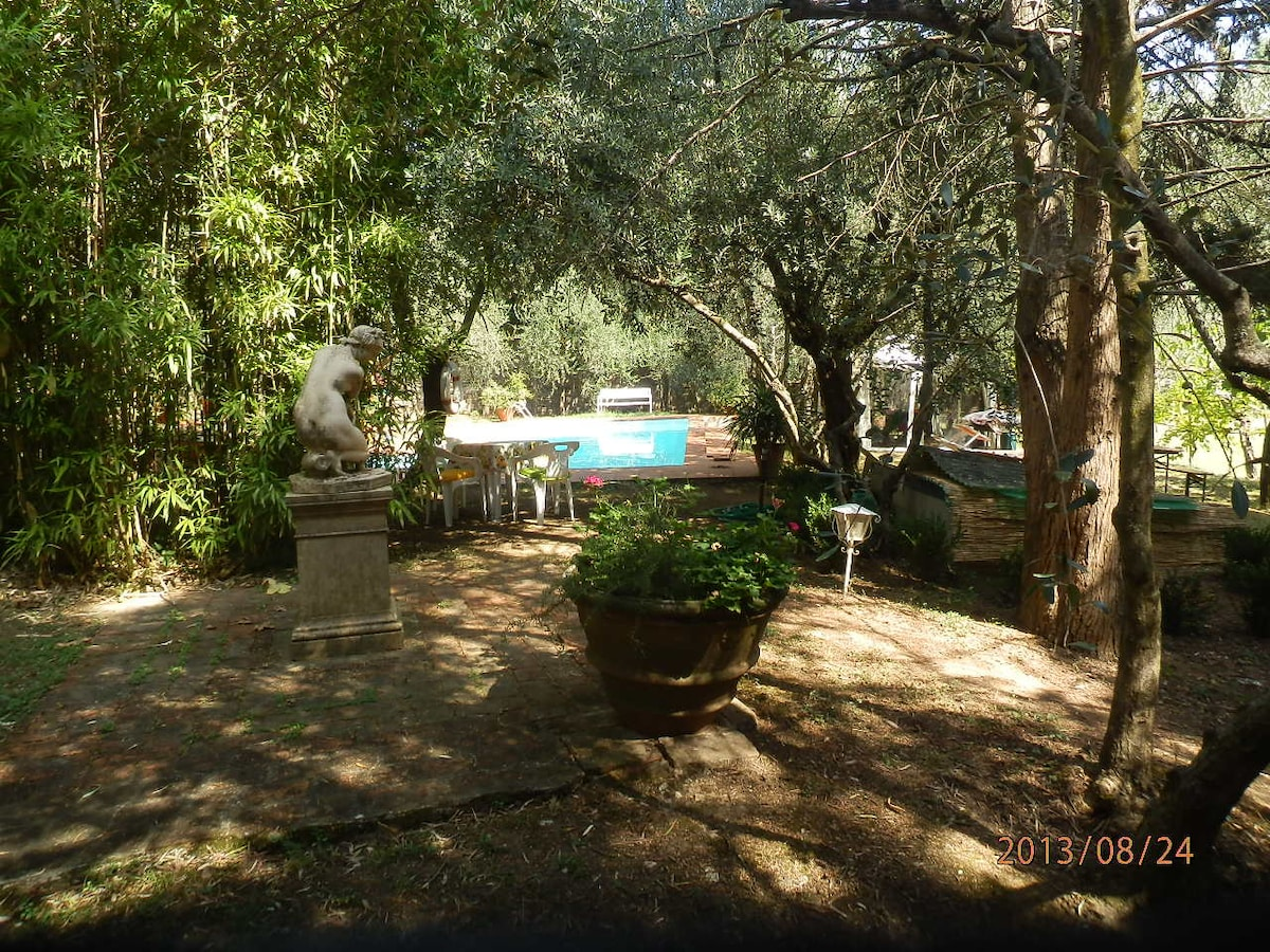 Swimming pool views surrounded by olive and fig trees and squirrels running around