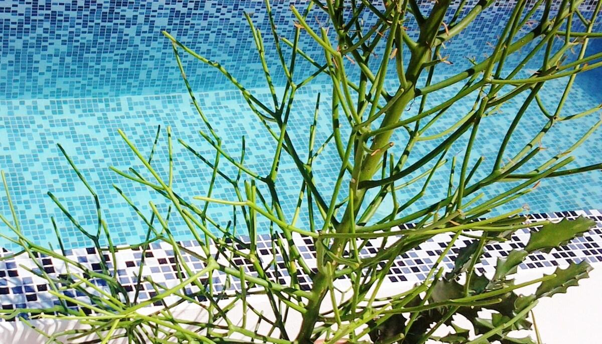 CASA NAAJ 3: Relaxing pool
