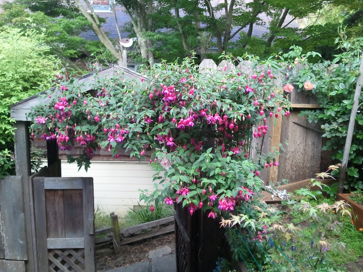 Fuschia's arching over the entry gate