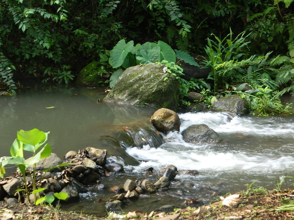 Tranquil river and jungle at Living Forest