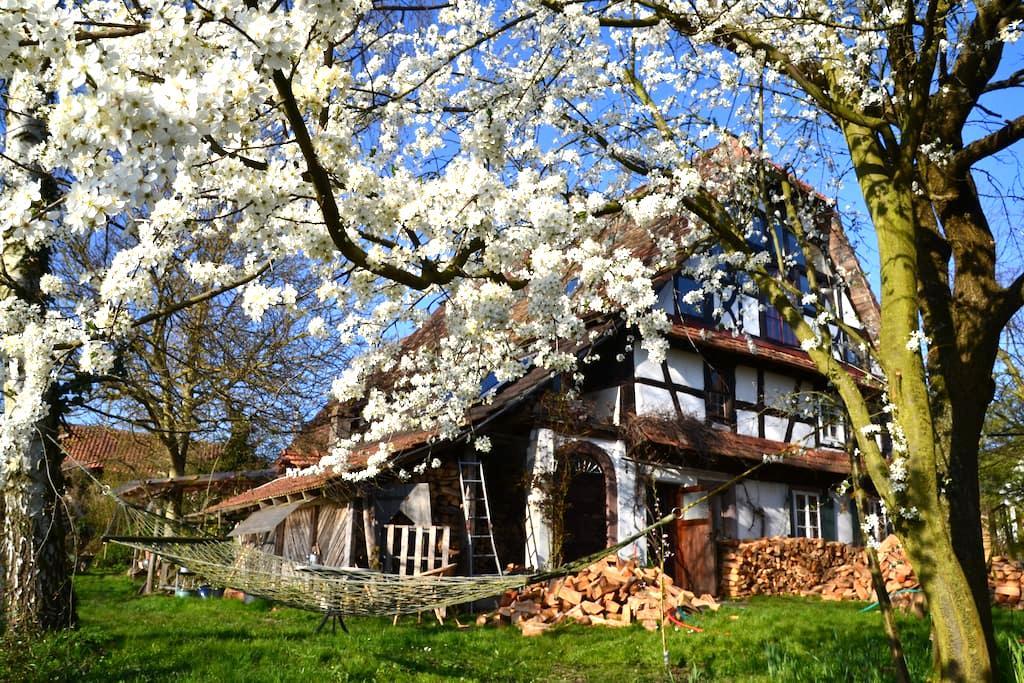 Alsace,Studio Apt.with Loft Bedroom - Oberlauterbach - 단독주택