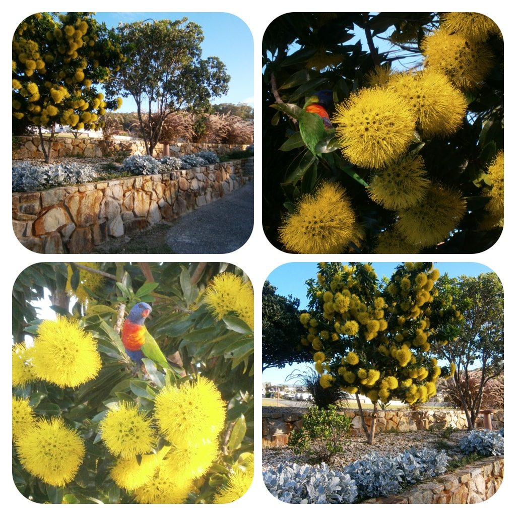 The front garden in bloom. The native birds love it!