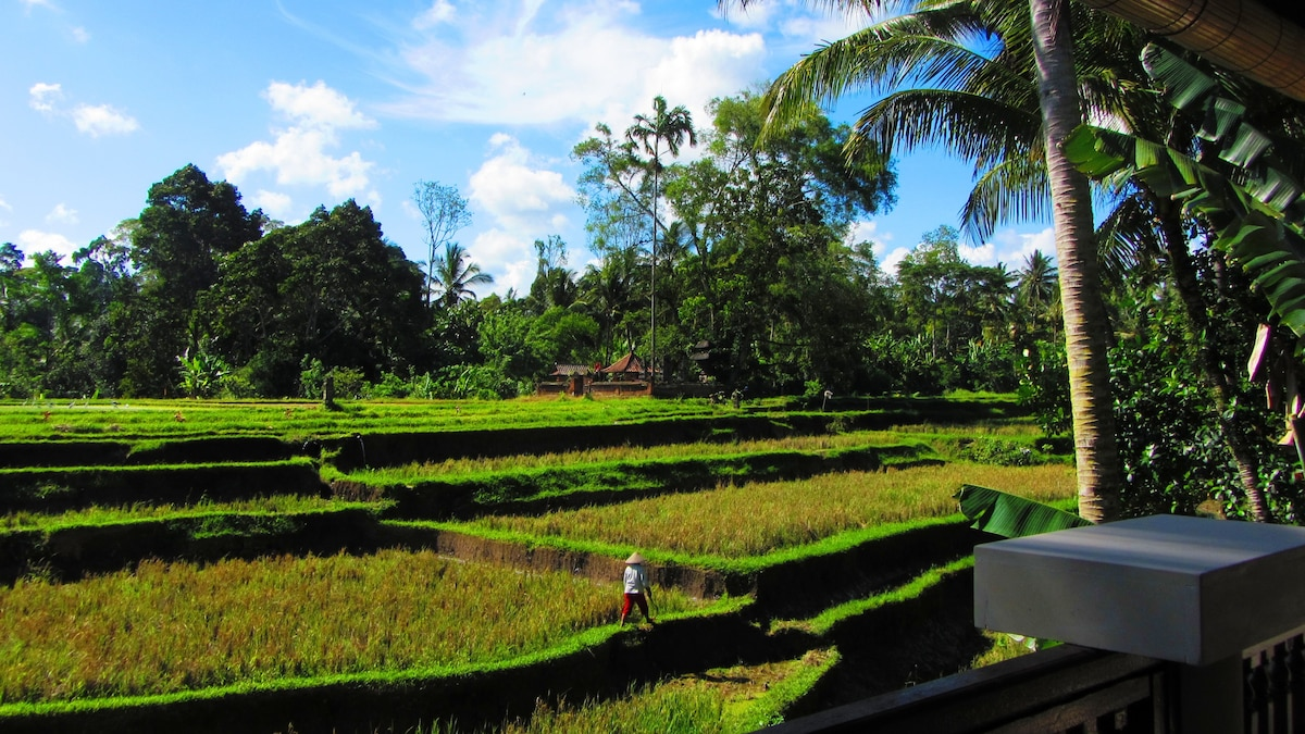 Personal rice paddy view. No other bungalows visible from the balcony. Only a special temple to the Dewi Sri, Balinese goddess of the rice fields.