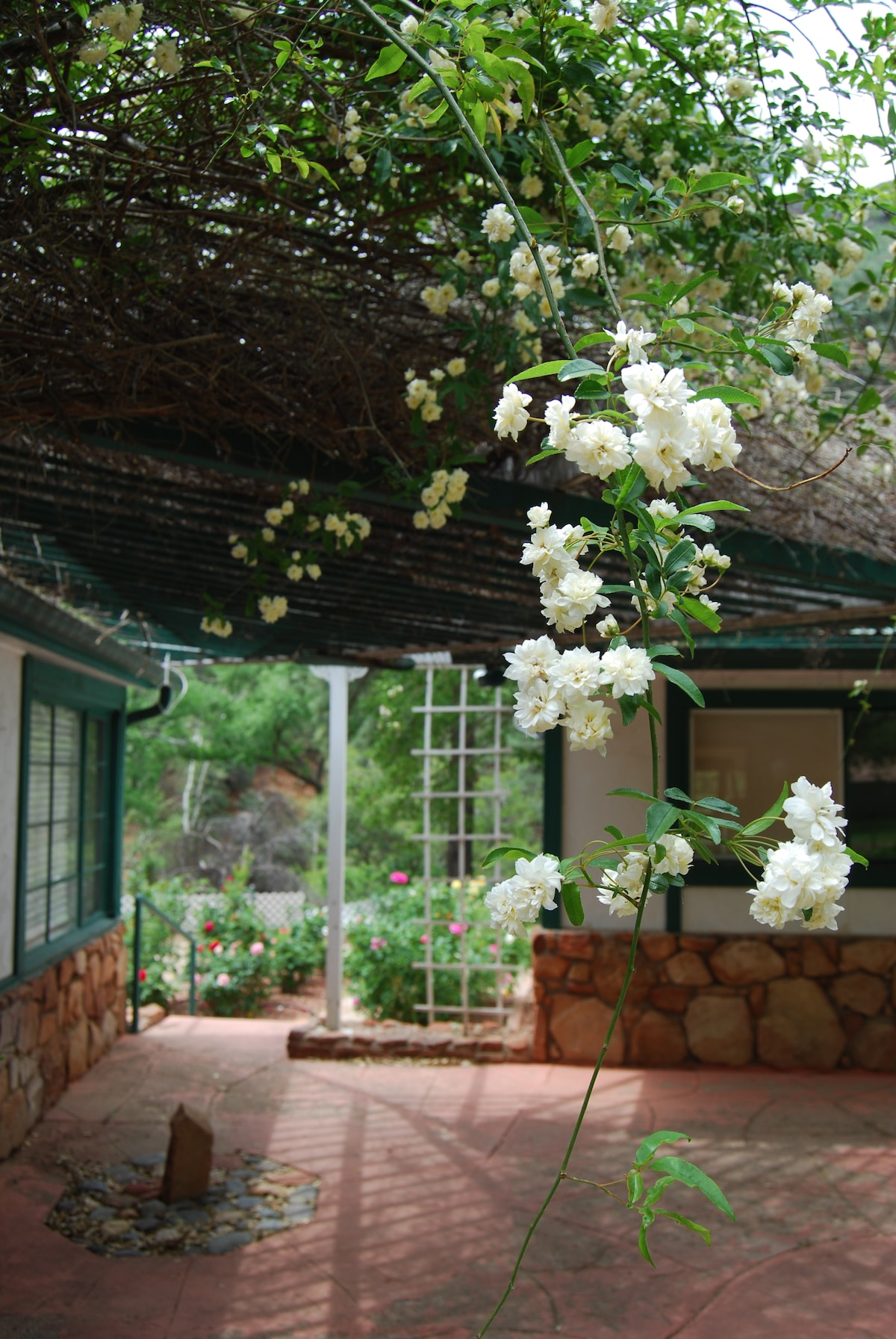 A view to the backyard rose garden