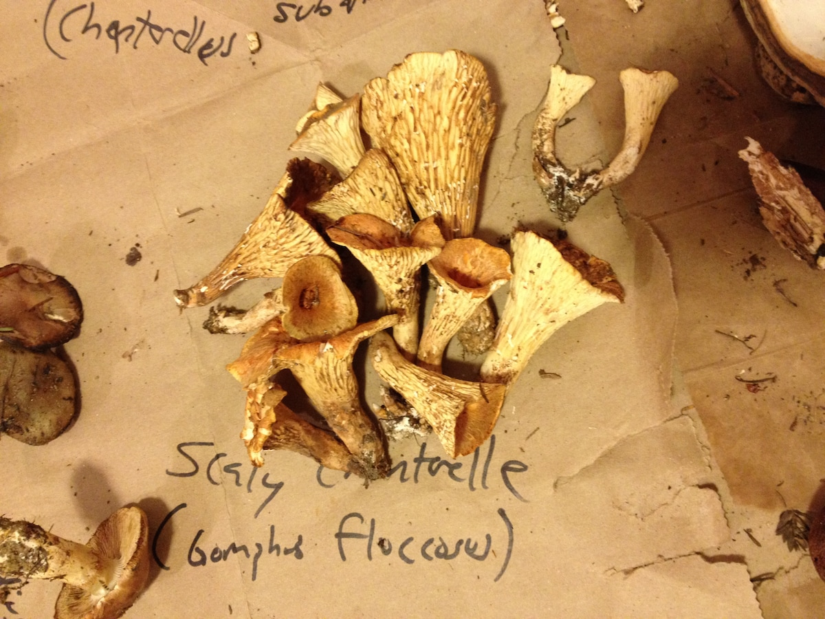 This is mushroom foraging heaven. We can point to you to our secret spots! (actual mushrooms foraged by Airbnb guests!)