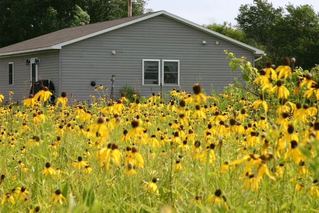 Peace on the Prairie - Murrayville