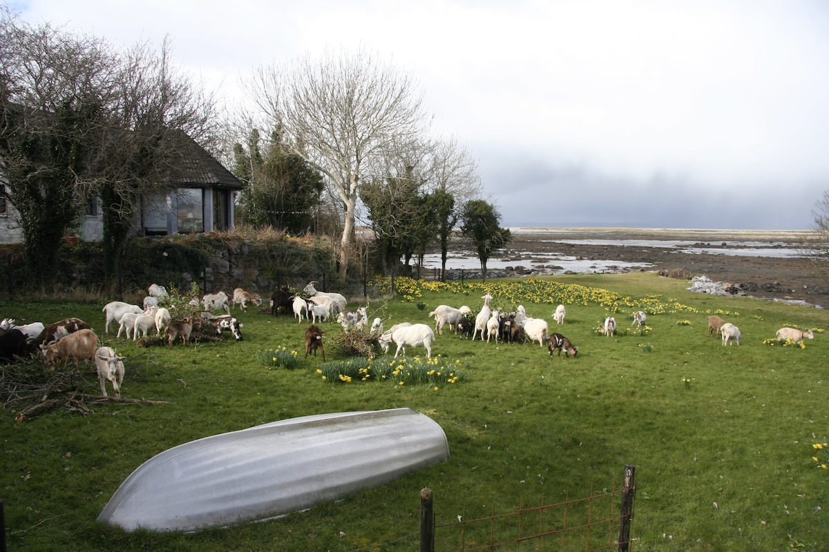 House in front of the Ballyvaughan Bay with goats