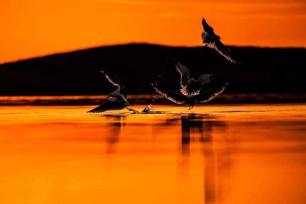 Zen Arctic Artistic Getaway Norway