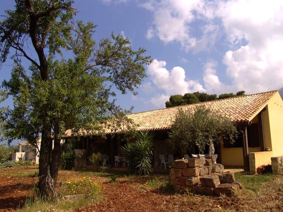 apartment with sea and olive trees - Castelluzzo - Дом