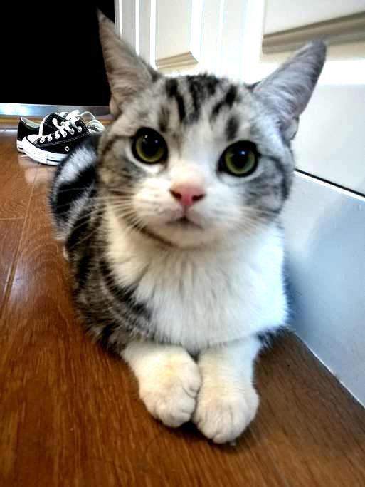 猫子青旅Kitty younth hostel(光谷步行街、德意风情街旁)壁炉女生4人间A床 - Wuhan