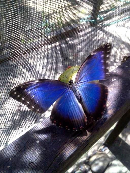 The Butterfly EcoPark - BZ - 宾馆