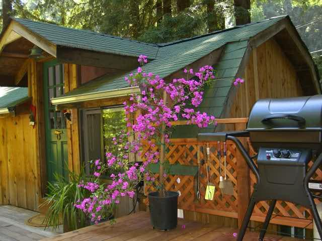 Love Shack Cabin in the Redwoods