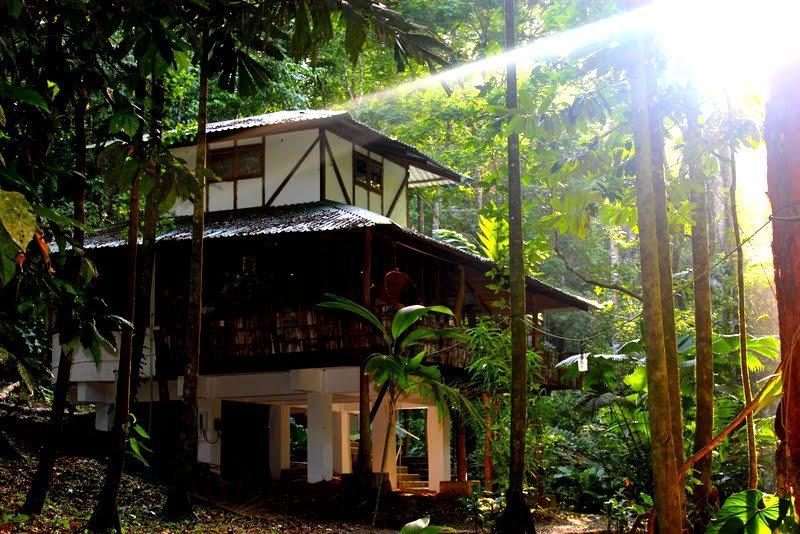 El Arbol house by daylight