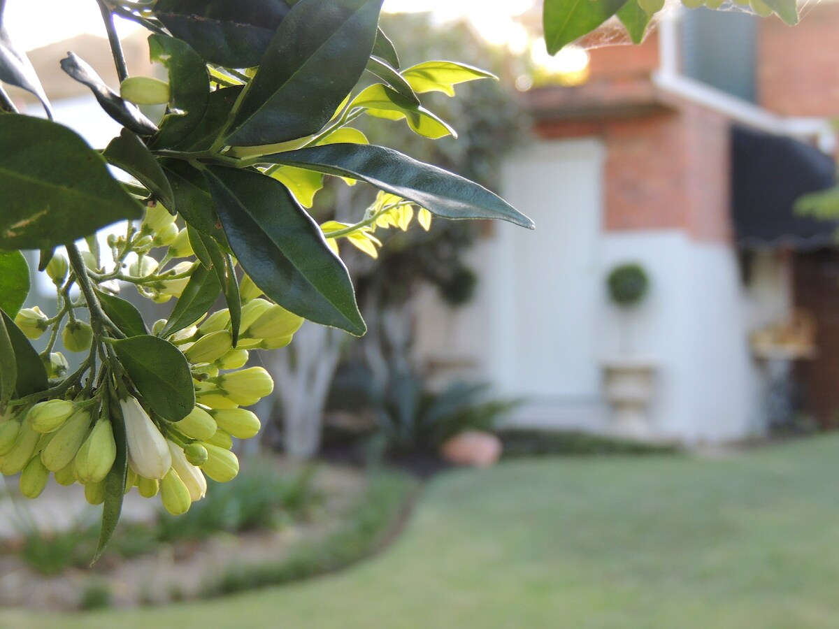 We enjoy our garden and often have flowers growing somewhere to enjoy their beauty and fragrance