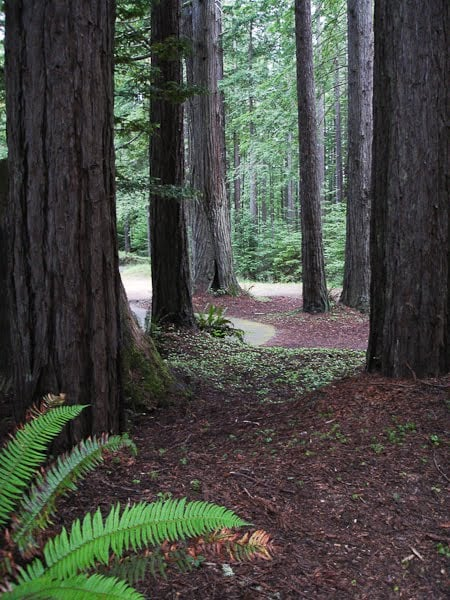 Explore the wonder of the redwood forest right out your door!