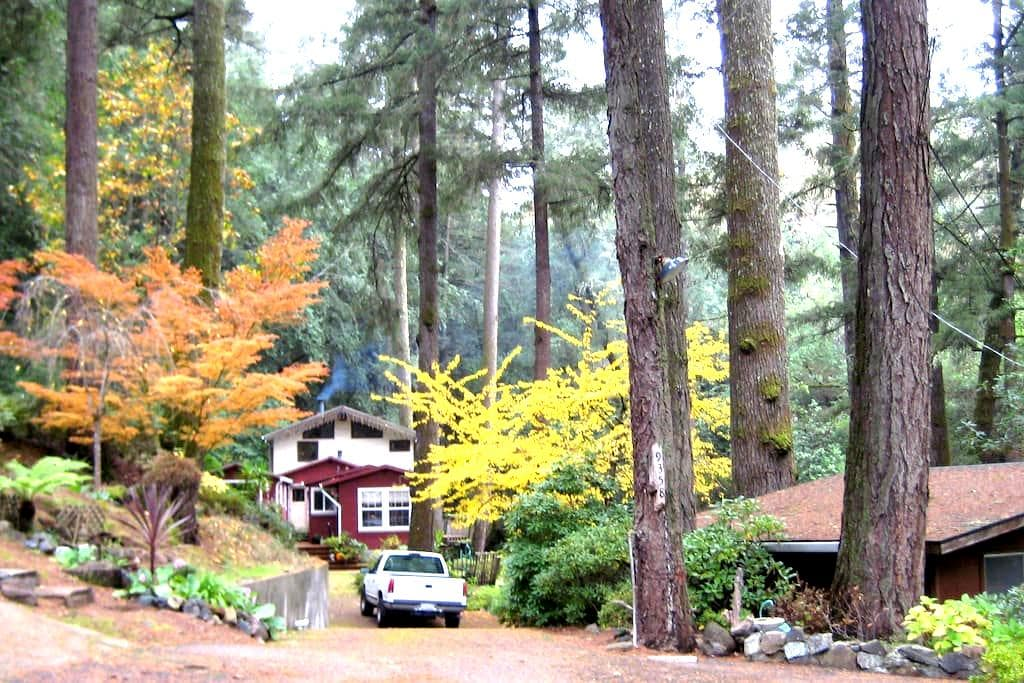 cozy cabin in the woods - Forestville