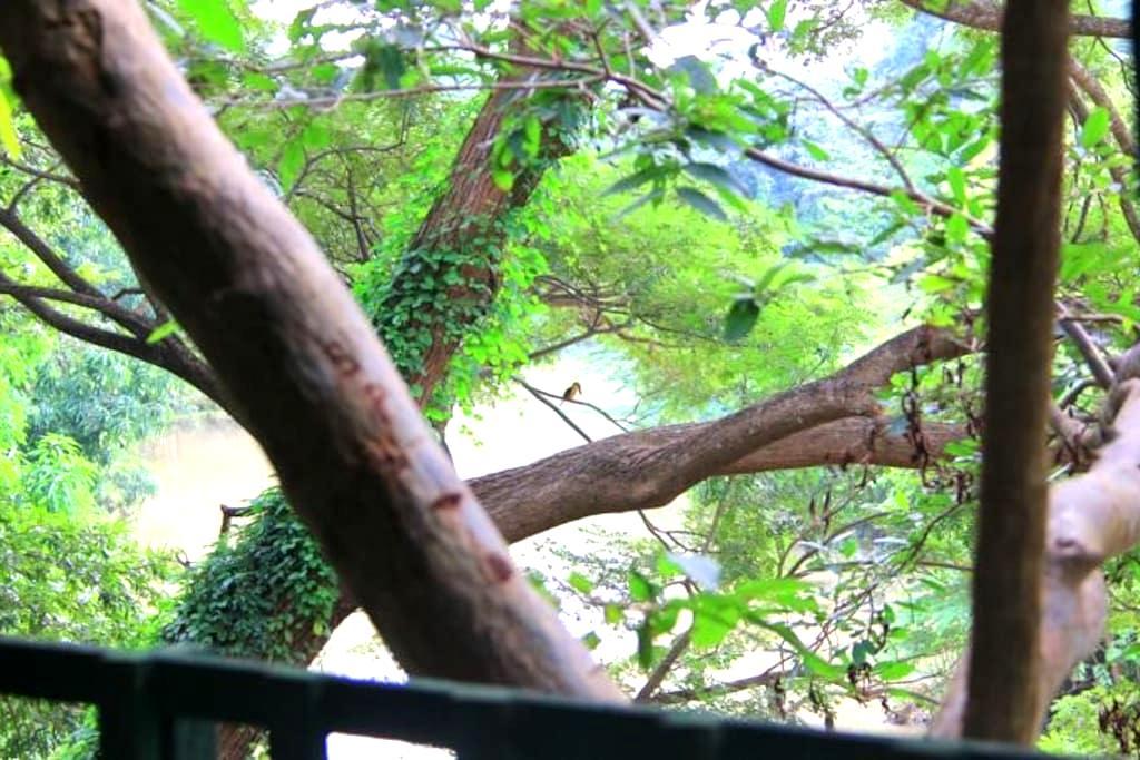 Family Treehouse with riverview - Tissamaharama - Casa en un árbol
