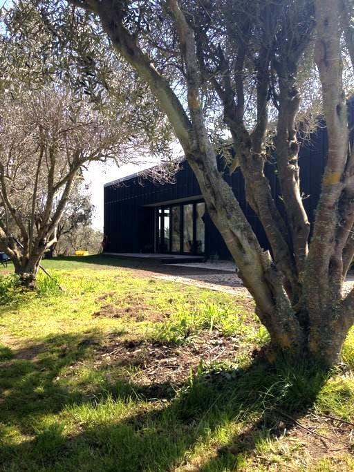Modern olive grove hideaway - Haumoana - Casa