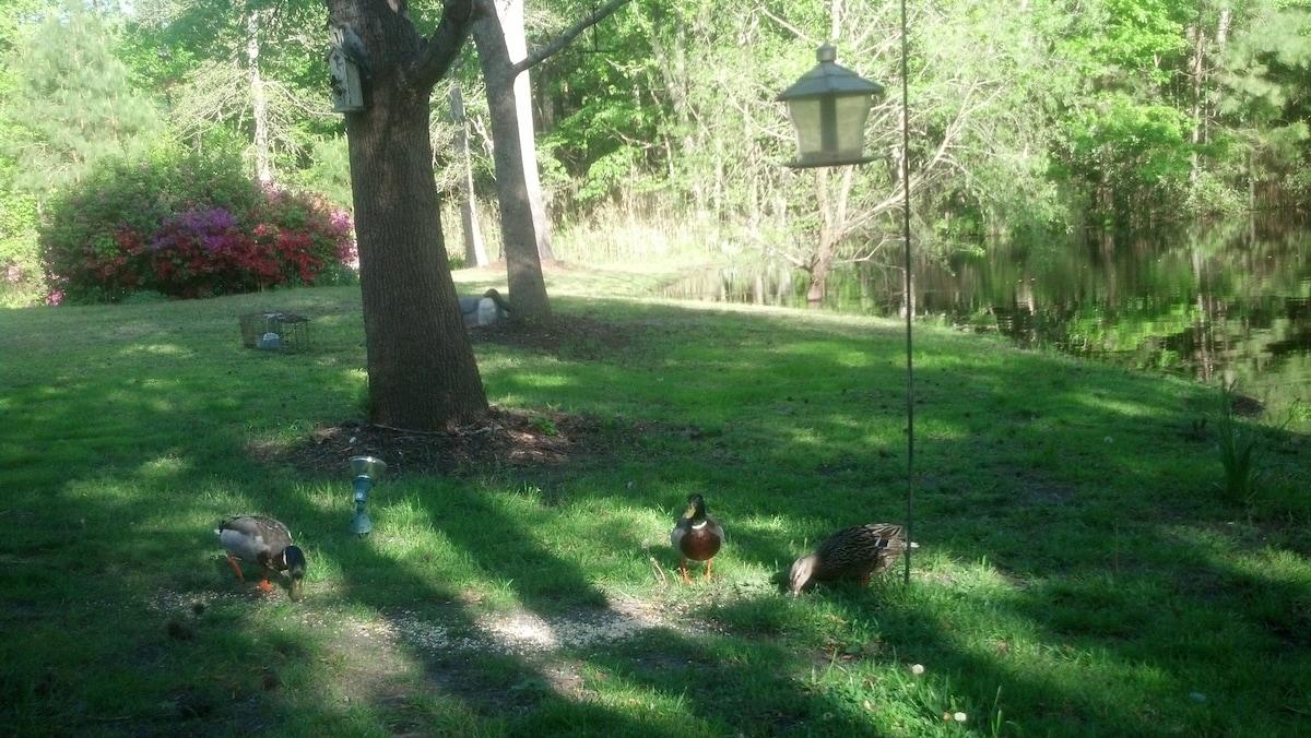Love feeding the Ducks
