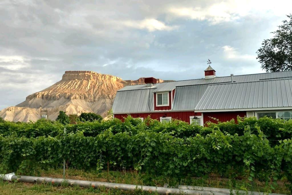 Beautiful Vineyard Barn House - Palisade - Rumah