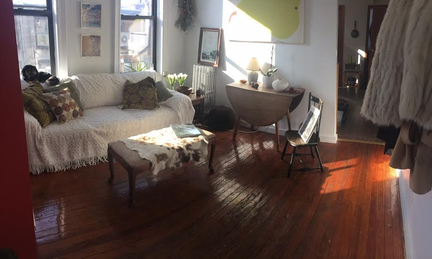 sunny living area + cute pup.