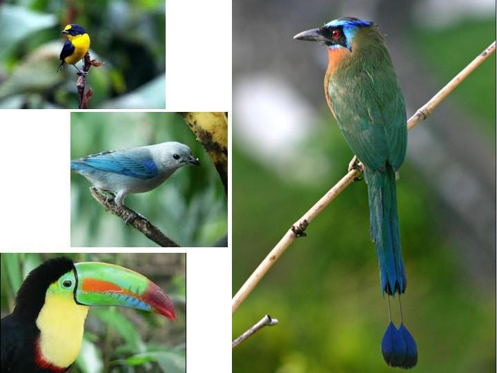 Some of the birds of Arenal