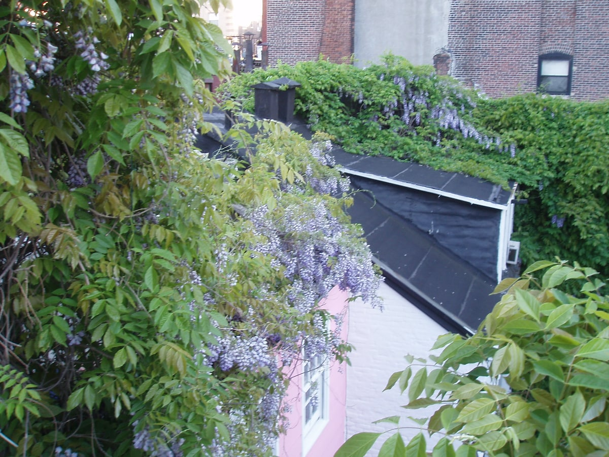 The view of the Wisteria from the magical balcony-like fire escape