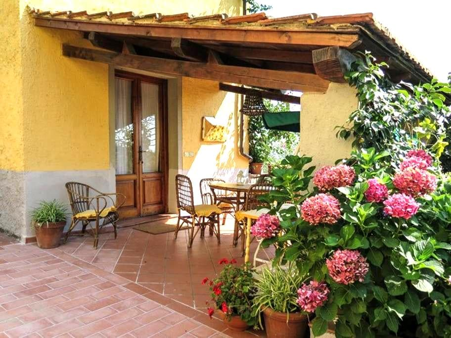Country house in beautiful olive grove in Tuscany - Uzzano - Appartement